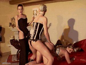 Lady K, Grace Cat, Jacky, Peggy Sue